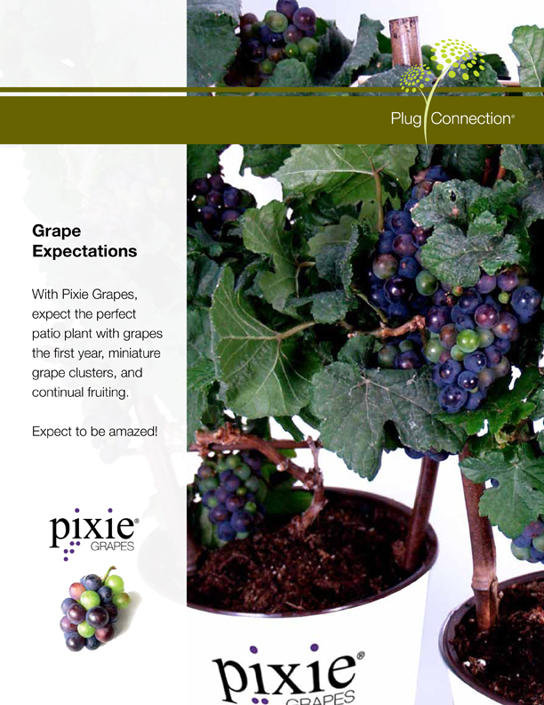Pixie Grapes Page 1